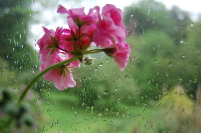 flower-rain-window