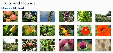 Fruits and Flowers - Photo Gallery