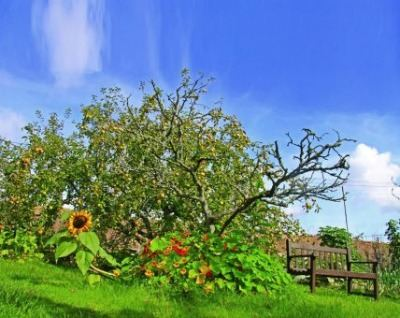 veg-garden-apple-tree